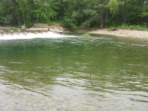 Обловленная яма под дамбой, река Леонидовка