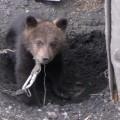 Житель Тымовского района пытался продать медвежонка