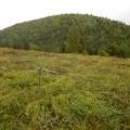 """19 гектаров леса, погибшего врезультате нефтеразлива, выявила экспедиция """"Эковахты Сахалина"""""""