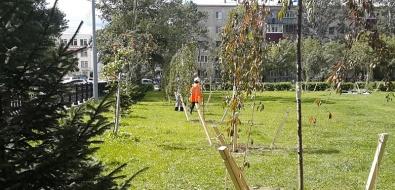 В сквере Асахикава вЮжно-Сахалинске высадили 88 саженцев необычной сакуры