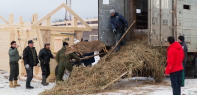 Анивское село Мицулевка стало ещеодним центром оленеводства наСахалине