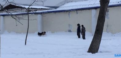 Собаки, резвящиеся вцентре города безповодков инамордников, беспокоят южносахалинцев