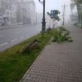 На проспекте Победы вЮжно-Сахалинске сломали молодые деревья