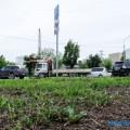 """Губительное """"благоустройство"""": южносахалинец обеспокоен оскудением биоразнообразия вгороде"""