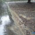 В южно-сахалинском парке имени Гагарина дожди смыли газон нановый асфальт