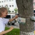 На 200 краснокнижных деревьях Южно-Сахалинска появятся QR-коды