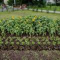 Четыре двухметровых сердца украсят Южно-Сахалинск коДню города