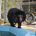 Животных Сахалинского зоопарка откармливают кзиме