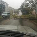 Добравшийся доОхи тайфун повалил дерево напроезжую часть