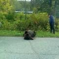 В Огоньках застрелили медведя— любителя слив ирыбы