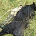 Медведя, убившего собаку, застрелили вШебунино