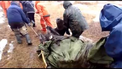 На Шикотане 20 человек втечение пяти часов спасали корову, увязшую вболоте
