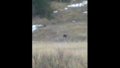 Медвежью семью вновь заметили вМакаровском районе