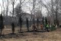 На проспекте Победы вЮжно-Сахалинске высадят ясени иклены вместо находящихся навосстановлении елей