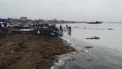 Жители села Стародубского обрадованы аномальными подходами селедки
