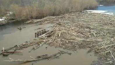 """Старые деревья несмогли пройти через мост пореке Тымь иустроили """"водную блокаду"""""""