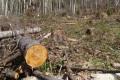 В сахалинских лесах продолжается разбор ветровалов