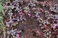 Неизвестные выкопали свежевысаженные цветы всквере Асахикава вЮжно-Сахалинске