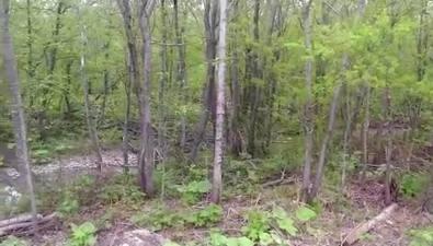 """В Южно-Сахалинске врайоне поворота на""""Уюн"""" заметили медведя"""