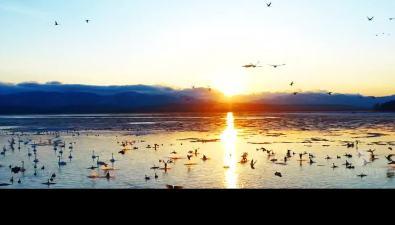 Уникальные кадры островной природы представит намеждународный конкурс команда Fly Vision Sakhalin