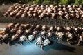 Сахалинские пограничники продолжают ловить браконьеров, промышляющих добычей краба