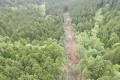 На горе Красной началась рубка леса длястроительства новой горнолыжной трассы