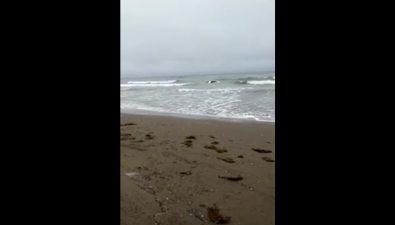 """В Долинском районе водитель """"Тойоты"""" разогнался напляже иоказался вморе"""