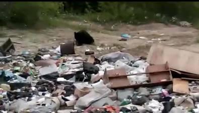 Несанкционированная свалка возле кладбища поселка Эхаби привлекла внимание медведя