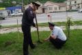 Невельские полицейские высадили кедры возле своего здания