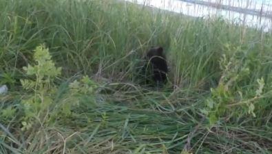 """Одинокий медвежонок просит """"милостыню"""" усахалинцев возле речки вКорсаковском районе"""