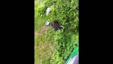 Медведь вышел клюдям вХолмском районе