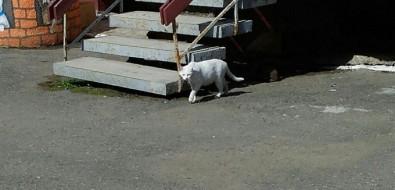 """Бездомные собаки икошки гуляют потерритории детского сада """"Теремок"""" вХолмске"""