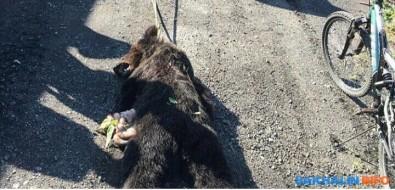 Убитого вМакарове медвежонка волокли поземле, привязав кквадроциклу