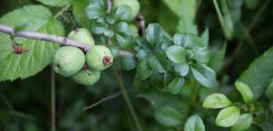 Ботаника помне плачет— ботанический садЮжно-Сахалинска
