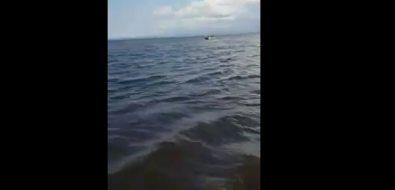Информация онарушениях придобыче корбикулы возере Айнском неподтвердилась