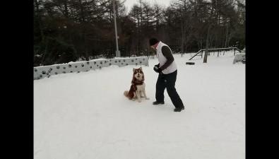 Питомцы охинских собаководов осваивают азызащитно-караульной службы