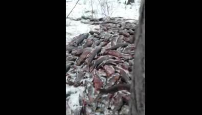 Очередная кровавая браконьерская точка обнаружена насевере Сахалина