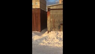 Холмчане разыскивают хозяина гаража, вкотором сноября заперты несколько собак