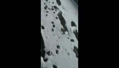 Жестокий отстрел собак произошел наглазах строителей мегафермы вРаздольном наСахалине
