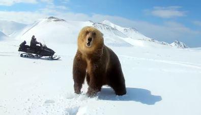Медведь пытался атаковать жителей Парамушира, гонявшихся заним наснегоходе