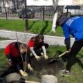 Углегорские волонтеры высадили деревья вцентральном сквере города