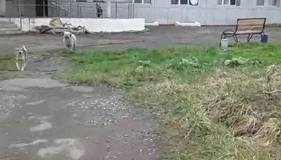 Неухоженность территории холмской ЦРБи живущие тамбезнадзорные собаки возмущают пациентов