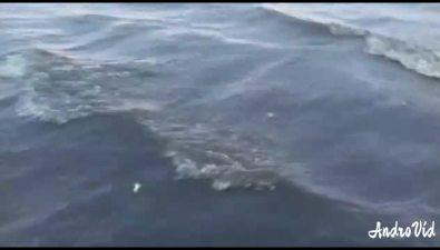 В заливе Пильтун произошел массовый замор морских обитателей