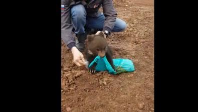 Медвежонок отобрал усахалинца пакет седой