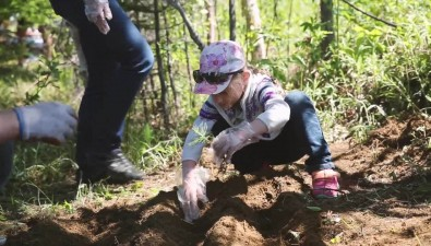 Несколько сотен сахалинцев заложили первый наострове народный кедровый питомник