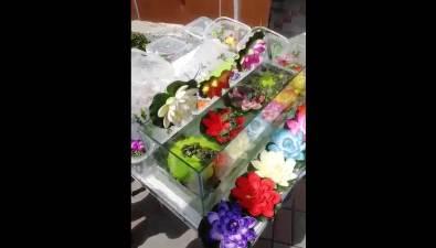 На улицах Южно-Сахалинска незаконно продают красноухих черепах