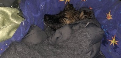 Подсолнечное масло помогло спасти собаку, которая целый день провела вщели между домами вКорсакове