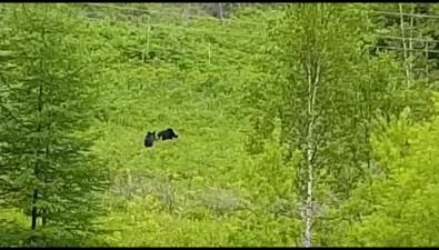 Рядом саэродромом Пушистый сахалинка сфотографировала медвежью компанию