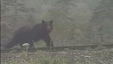 Сахалинцы тотут, тотам замечают медведей