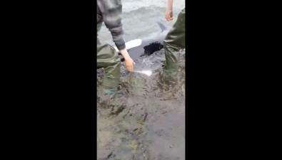 Белокрылая морская свинья погибла врайоне Озерского